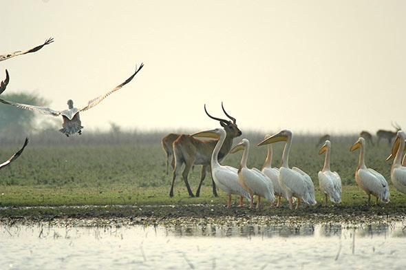 Lochinvar-National-Park-Zambia
